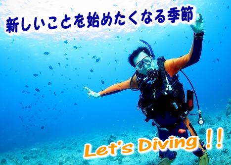 ダイビング 神戸.png